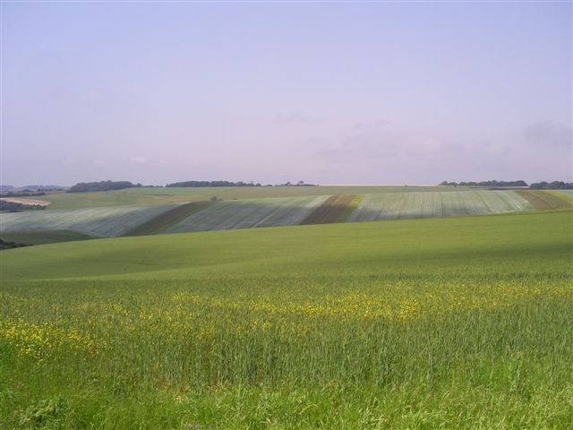 Management for farmland birds