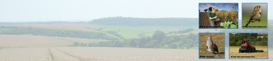 South Downs Farmland Bird Initiative